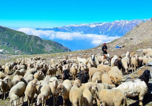 Rohtang Pass (Kullu)
